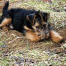 Baby Tucker Resting from a Digging Job. by barnsis