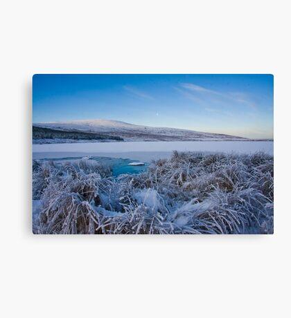 frosty Canvas Print