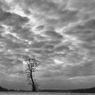 Lone Tree by Michael  Dreese