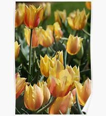 Yellow Tulip Garden Poster