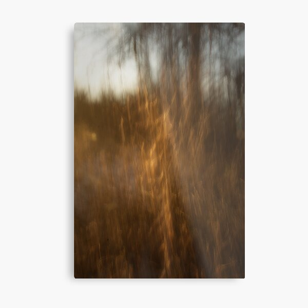 As The Afternoon Light Fades Metal Print