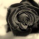 My Beautiful Dark Rose by kkphoto1