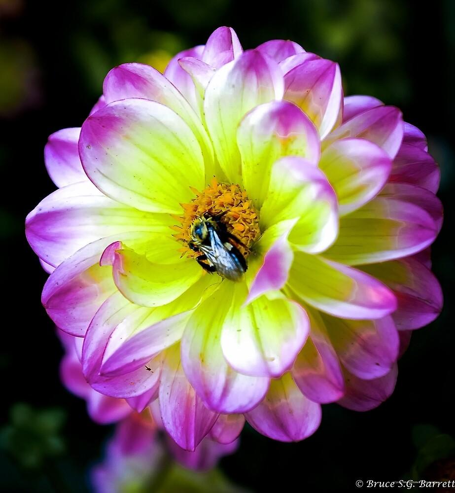 Flower & Bee by smoothstones