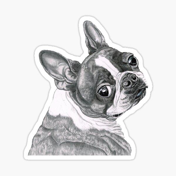 Best Boston Terrier Sticker