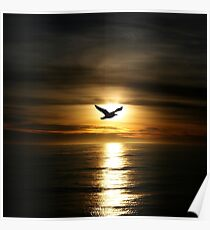 Skybird in Antarctica Poster