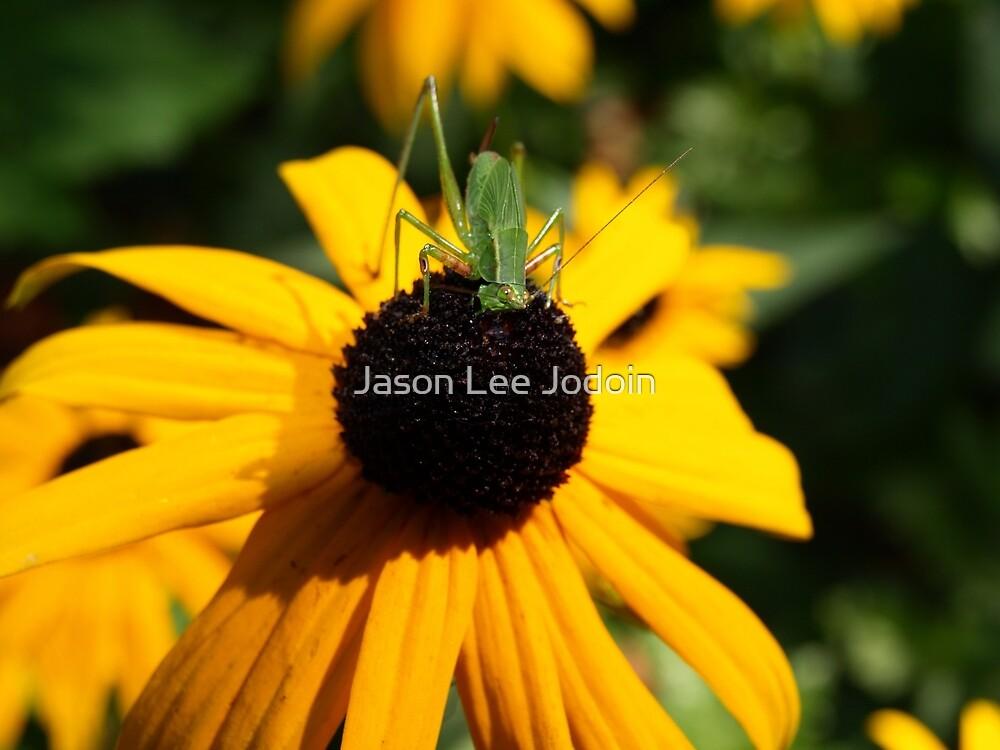 Grasshopper by Jason Lee Jodoin