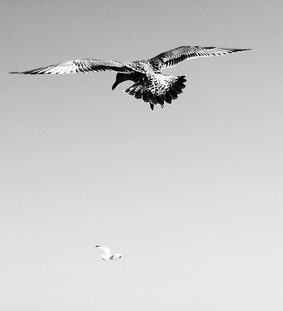 Flying birds  by soulintrip