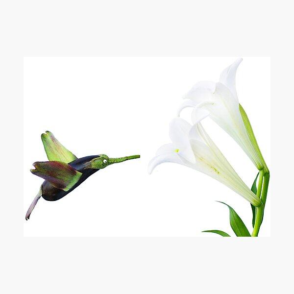 Humming-Veggie Photographic Print