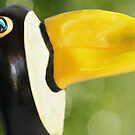 Pepper-Toco Toucan by Vanessa Dualib
