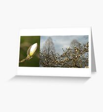 Budding Magnolia diptych Greeting Card