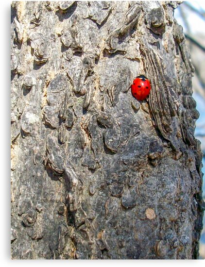 Lady(bug) in Red by dm-photography