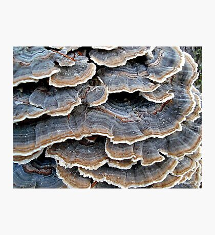 TURKEYTAILS 1 Photographic Print