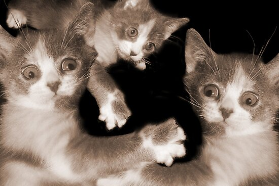 """""""Pawing Aroung"""" - cats gone crazy by ArtThatSmiles"""