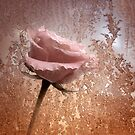 Glitter Freeze by rosiephoto