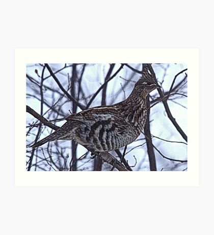 And A Partridge in a Elm Tree Art Print