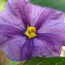 Tiny Purple Flower by Linda Scott