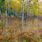 Autumn Forest Delight Landscape by Bo Insogna