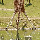 """""""Everybody's Got Challenges"""" - Giraffe struggles for a drink by ArtThatSmiles"""