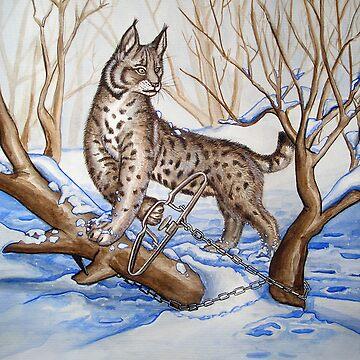 Trapped Bobcat by Polecatty