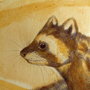 Marbled Polecat- Vormela peregusna by Polecatty