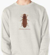 Tribolium castaneum - Red flour beetle  Pullover