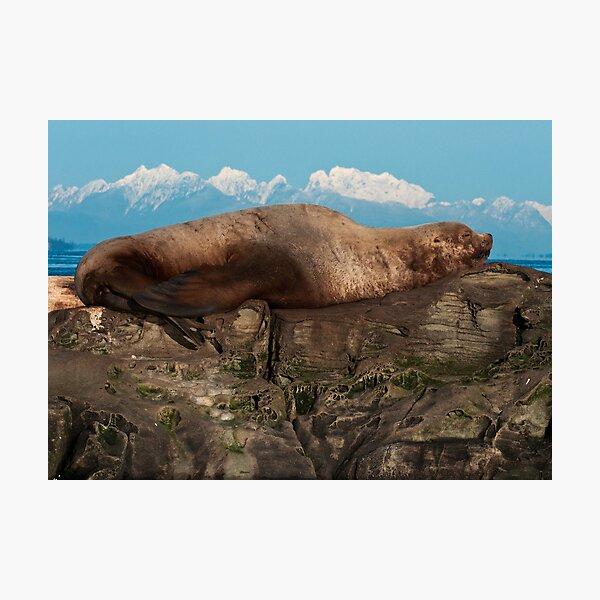 Sea Lion on the Rocks Photographic Print