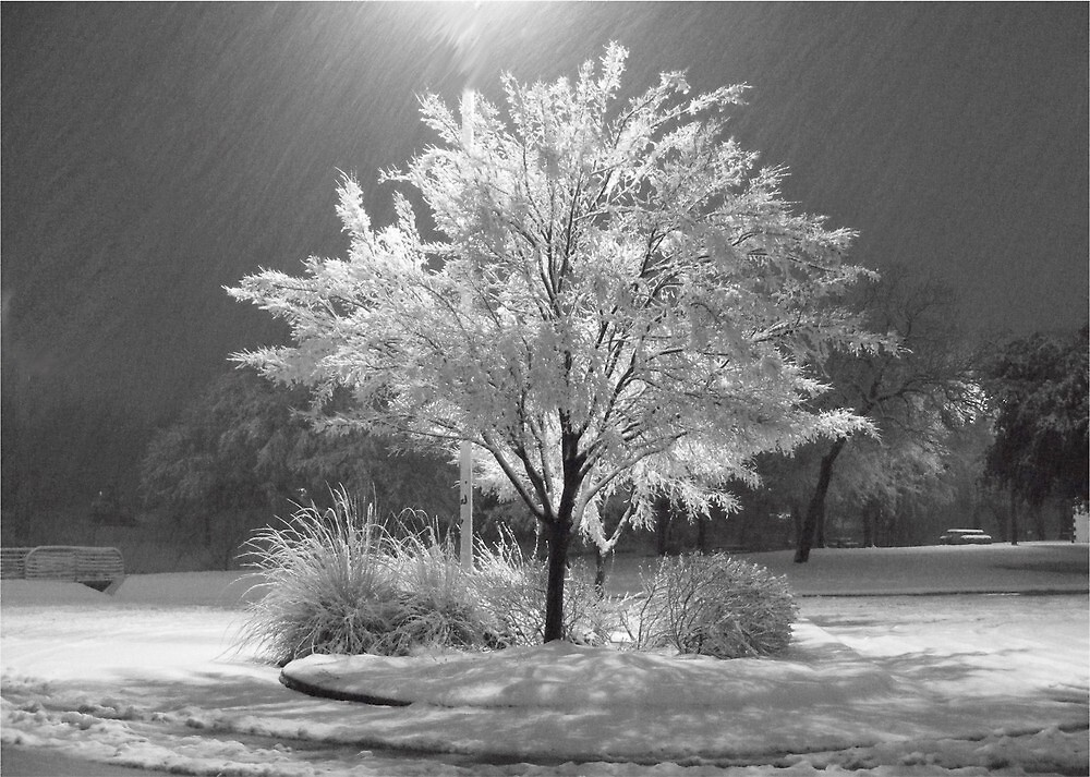 An Ice - Snow covered Tree by ronniewiggin
