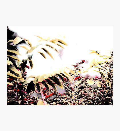 Fall Grass 1 Photographic Print
