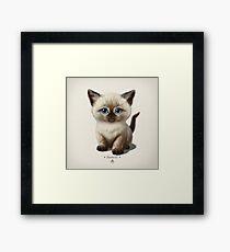 Cataclysm- Siamese Kitten Classic Framed Print
