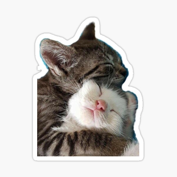 HD Stickers // HD Animmal sticker // Kittens  Sticker
