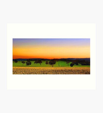 Canola Farm At Dawn Art Print