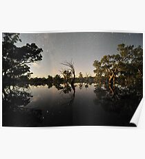 Moonlit Trees Poster