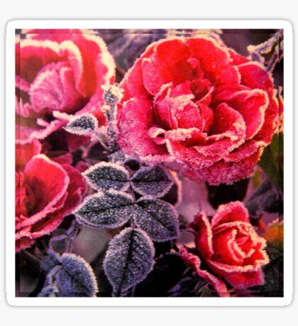Christmas Roses  Sticker