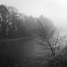 Misty Moment of River Cree, Newton Stewart, Scotland  by sarnia2