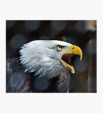 Screaming Bald Eagle Photographic Print