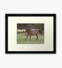 What A Pose! Framed Print