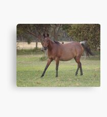 What A Pose! Canvas Print