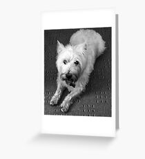 Odie Greeting Card
