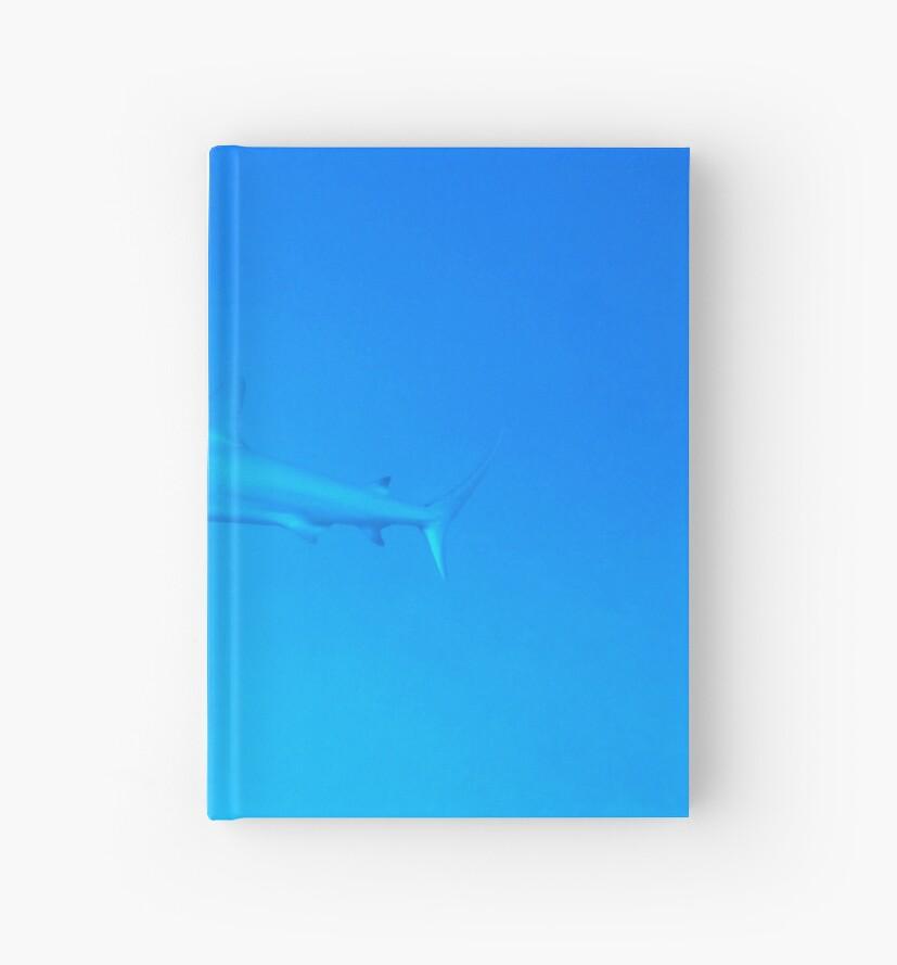 Caribbean Reef Shark by Amy McDaniel