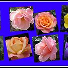 Roses of Many Colours Collage von BlueMoonRose