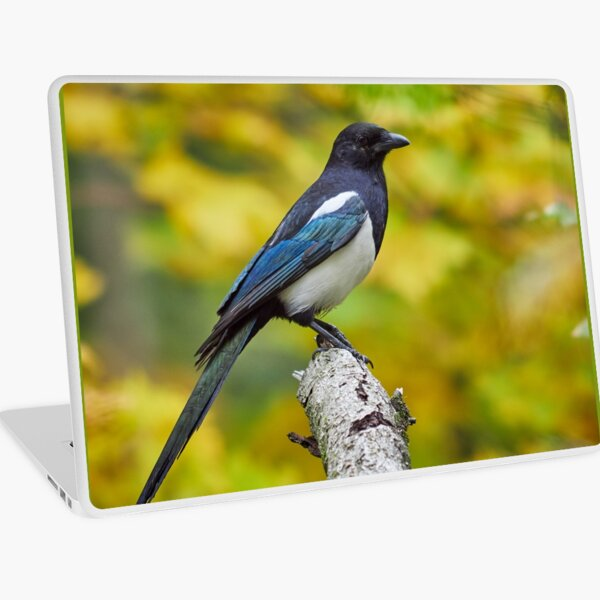 Eurasian magpie pose with colors of Fall Laptop Skin