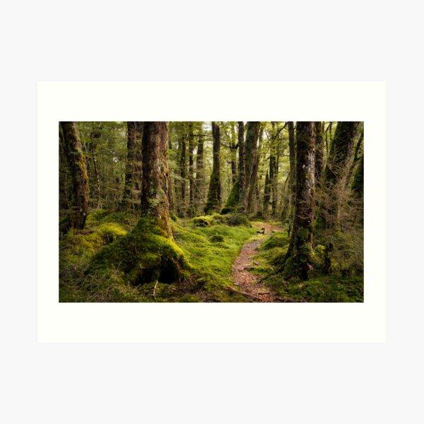 The Forest Path - Fiordland National Park Art Print