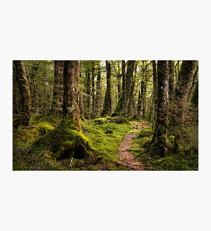 The Forest Path - Fiordland National Park Photographic Print