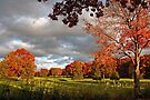 Autumn Sunshine After The Storm by Gene Walls