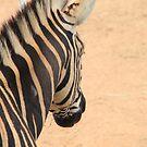 Zebra by Michelle Munday
