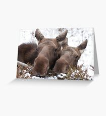 Christmas Moose Greeting Card