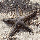 Starfish by eleni dreamel