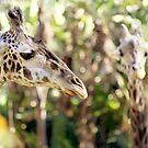 absrtact with two giraffes von Marianna Tankelevich