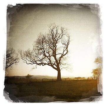 Lone Tree by Stormswept