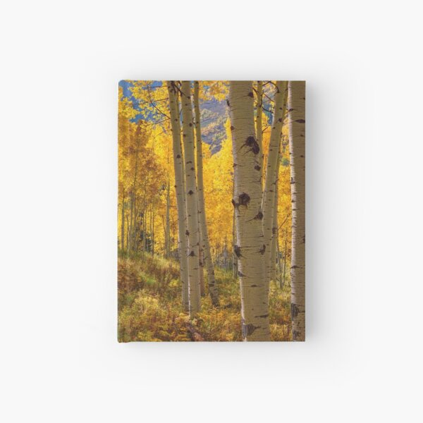 Autumn Aspen Forest Aspen Colorado Panorama Hardcover Journal